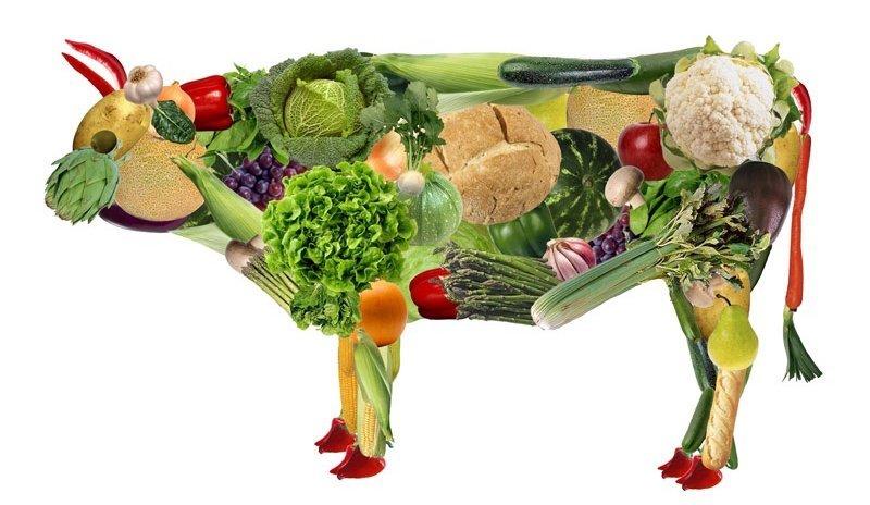 Вегетарианство, что это и с чем едят? | Хайповые тренды | Яндекс Дзен